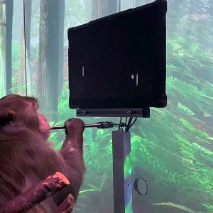 According to Elon Muskin, a monkey thanks neuralgia |  Video