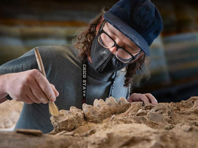 In Northern California, a park ranger discovers a treasure trove of several million-year-old fossils.