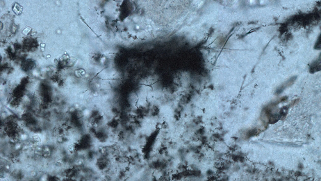 They identify the earliest traces of primitive life on Earth dated 3.4 billion years ago