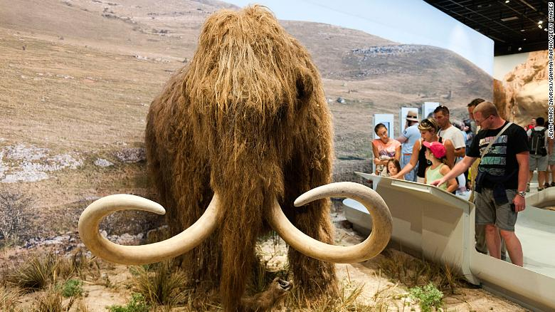 They support a $ 15 million mammoth revival plan